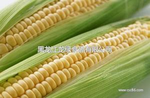 北大荒2015新货甜糯玉米有机玉米棒农家新鲜