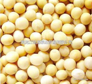 绿色食品-大豆