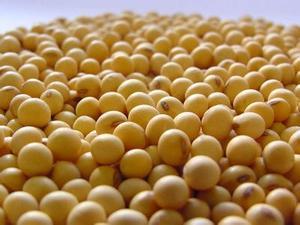 超低价供应大豆