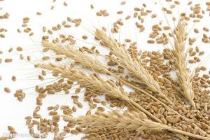 河南沃土小麦