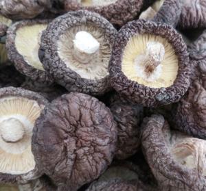 栗香果园供应北大荒绿野干货东北特产珍珠菇100g