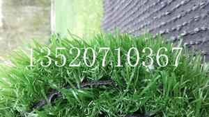 北京人造草坪出售 人工草坪价格