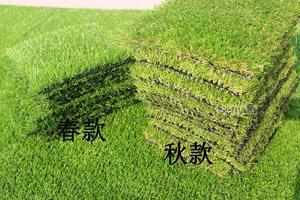 北京人工草坪价格厂家假草坪批发