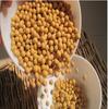 黑龙江特产笨黄豆 东北特产 十八亿亩