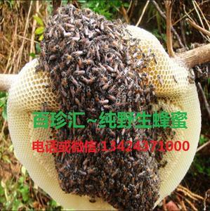 西双版纳野生黑蜂蜜
