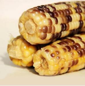 甜糯玉米有机玉米棒农家新鲜玉米棒东北特产