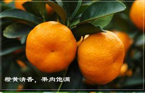 富川特产  南丰蜜橘   现摘新鲜水果蜜桔