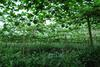 绿色食品,无公害食品、野鸭、野葫芦籽