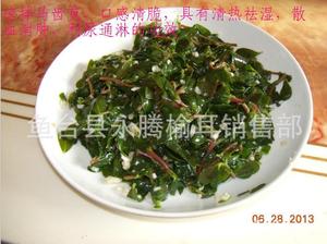 长命菜、长寿菜、五行草,马齿苋保健野生蔬菜批发