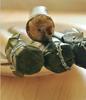 厂家批发四川特产 百瑞竹黄金敲敲竹筒饭400g