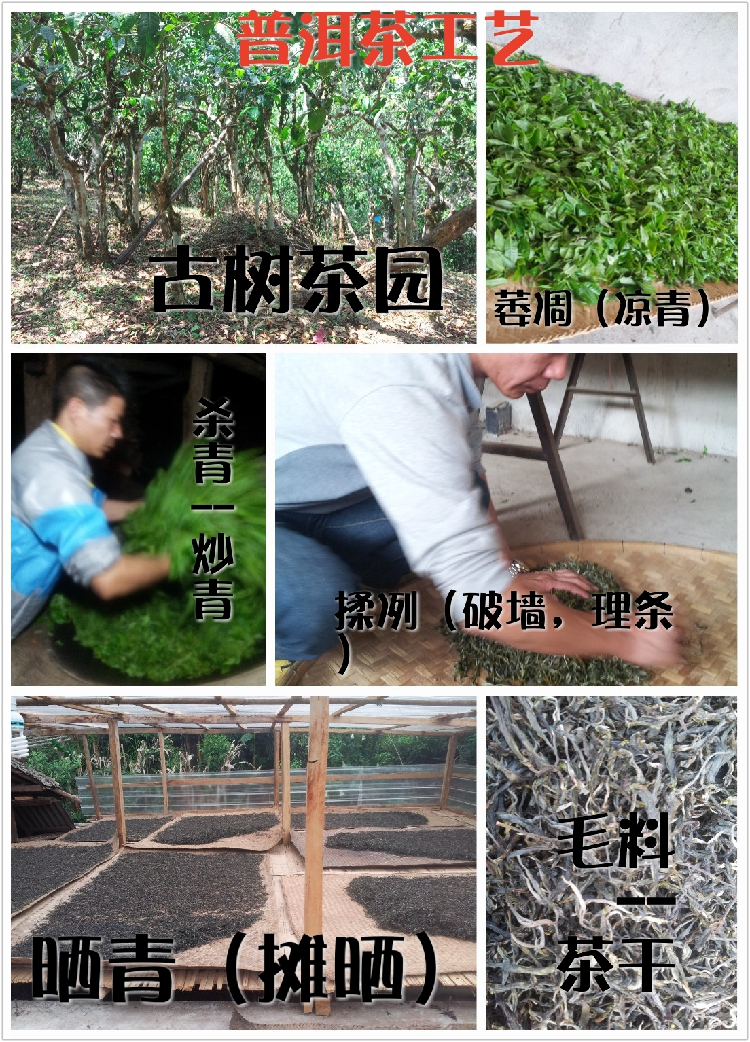 白龙须贡 云南普洱茶饼茶生茶 10年图片七