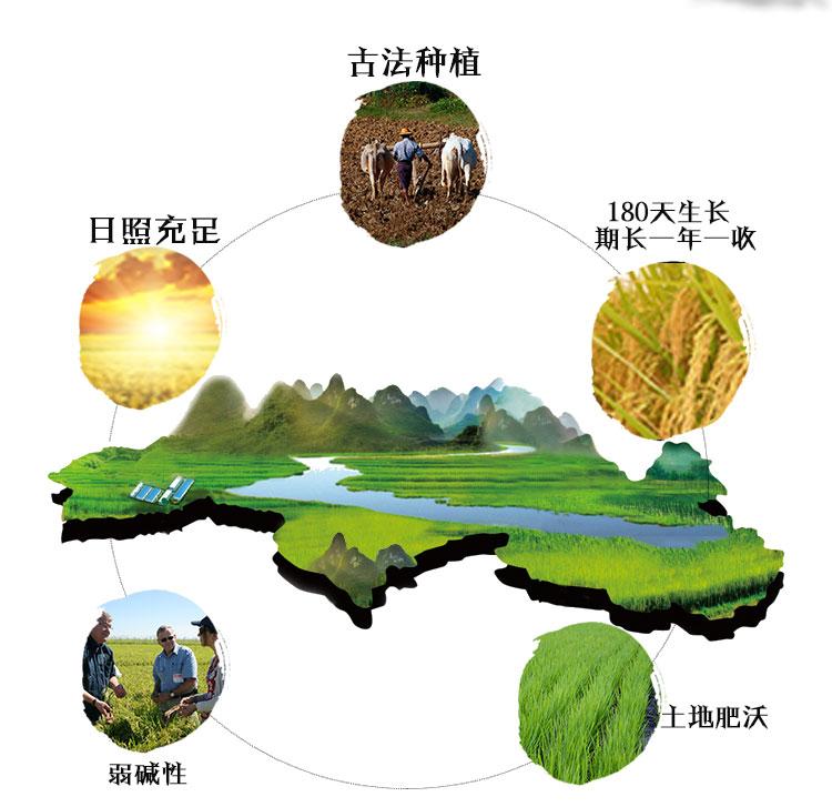 (特)柬埔寨 柬自然牌原生茉莉香米 0107359图片二