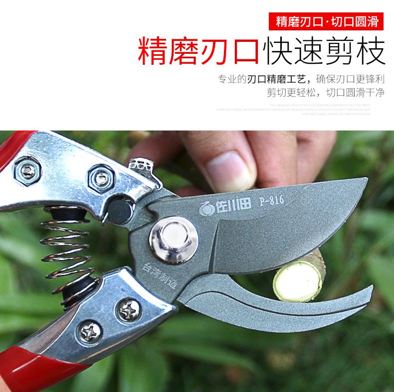 台湾佐川田 816 修枝剪刀 果树修剪工具 园林剪刀 树枝剪 园艺图片七