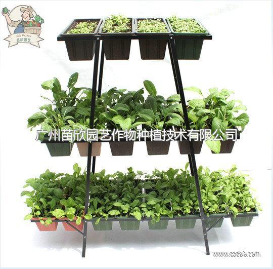 阳台种植套装 种花种菜
