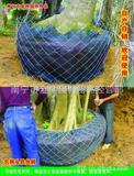 批发护根 打包树头专用铁网 厂家直销 量大从优