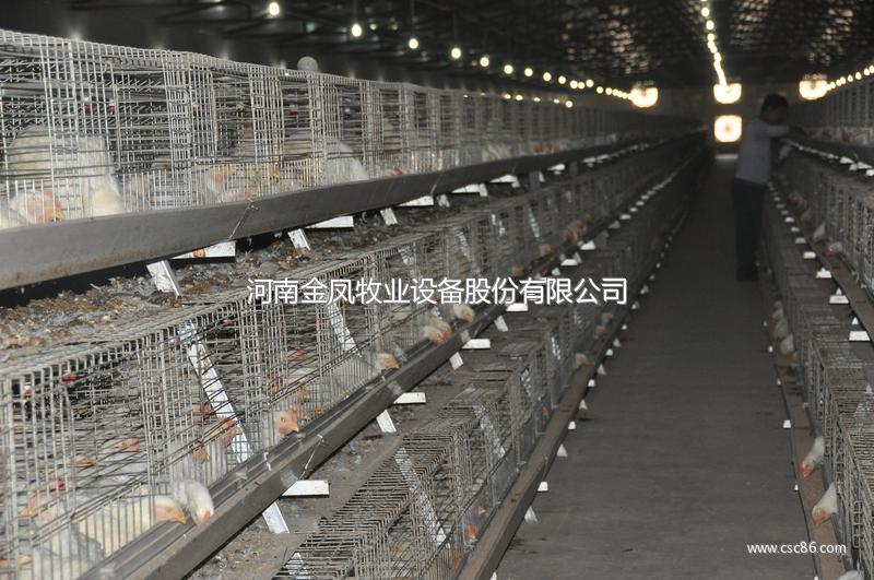 河南金凤三层阶梯肉鸡笼_畜牧养殖业机械2网站