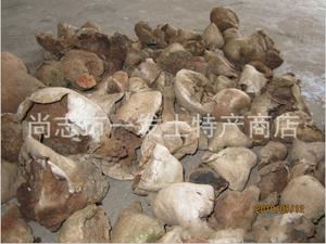 东北马勃 灰白马勃 野生资源 黑龙江省 数量稀少
