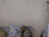 无纺布素色壁纸