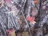 600D大树叶 大森林树叶花 牛津布涂层pvc