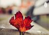 秋天到啦!在此附上秋季养生的正确打开方式!